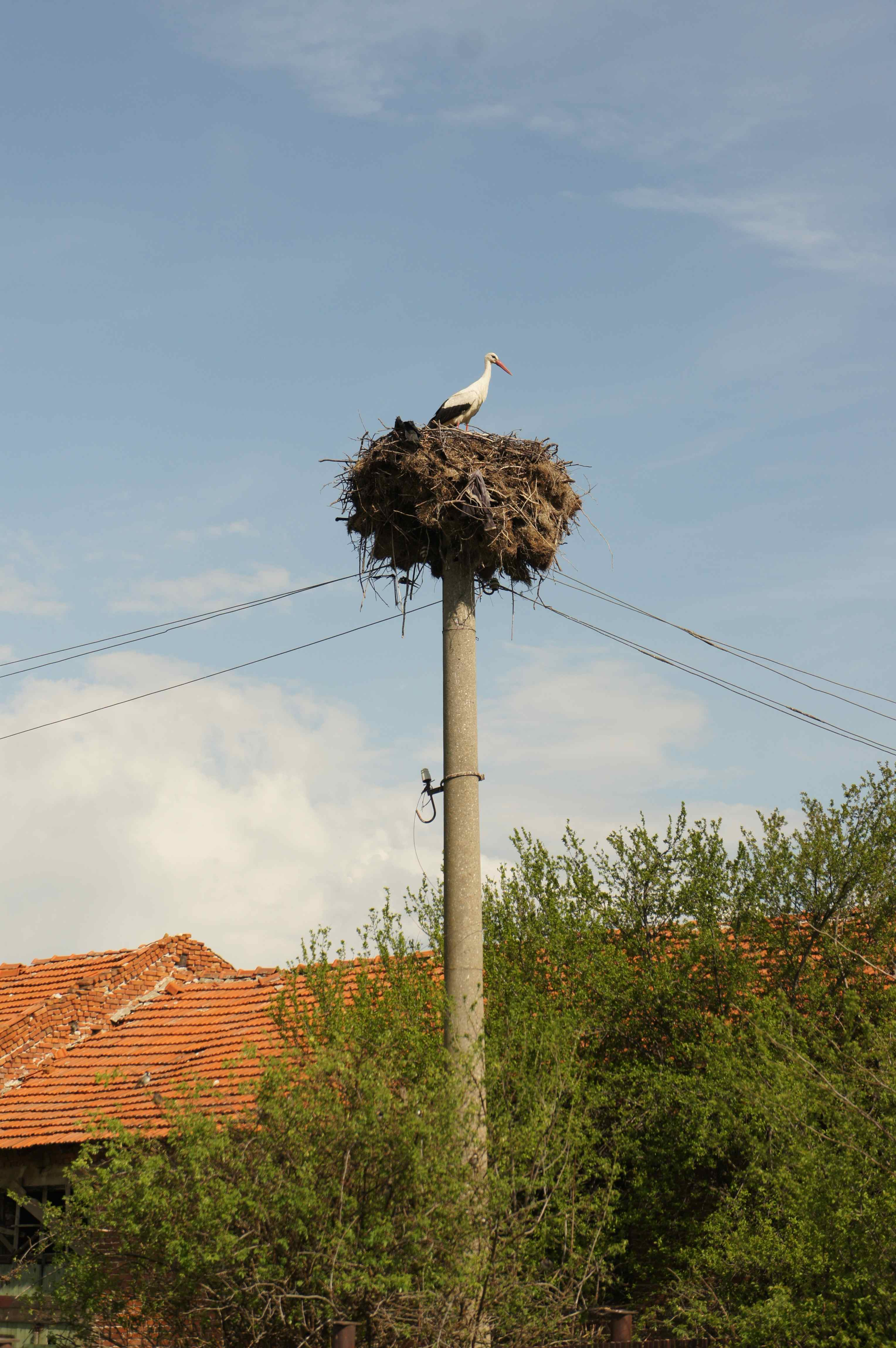 Stork in its nest in a Bulgarian village