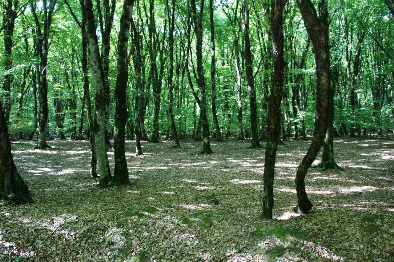 ระหว่างทางที่ปั่นออกจากตรงนี้ไป เราปั่นผ่านป่าไม้ใบที่ดูร่มรื่นและคิดว่าตรงจุดนั้นเป็นเหมือนอุทยานอะไรสักอย่าง มีร้านค้ามากมายโชคดีที่ไม่ค่อยมีรถมากนัก