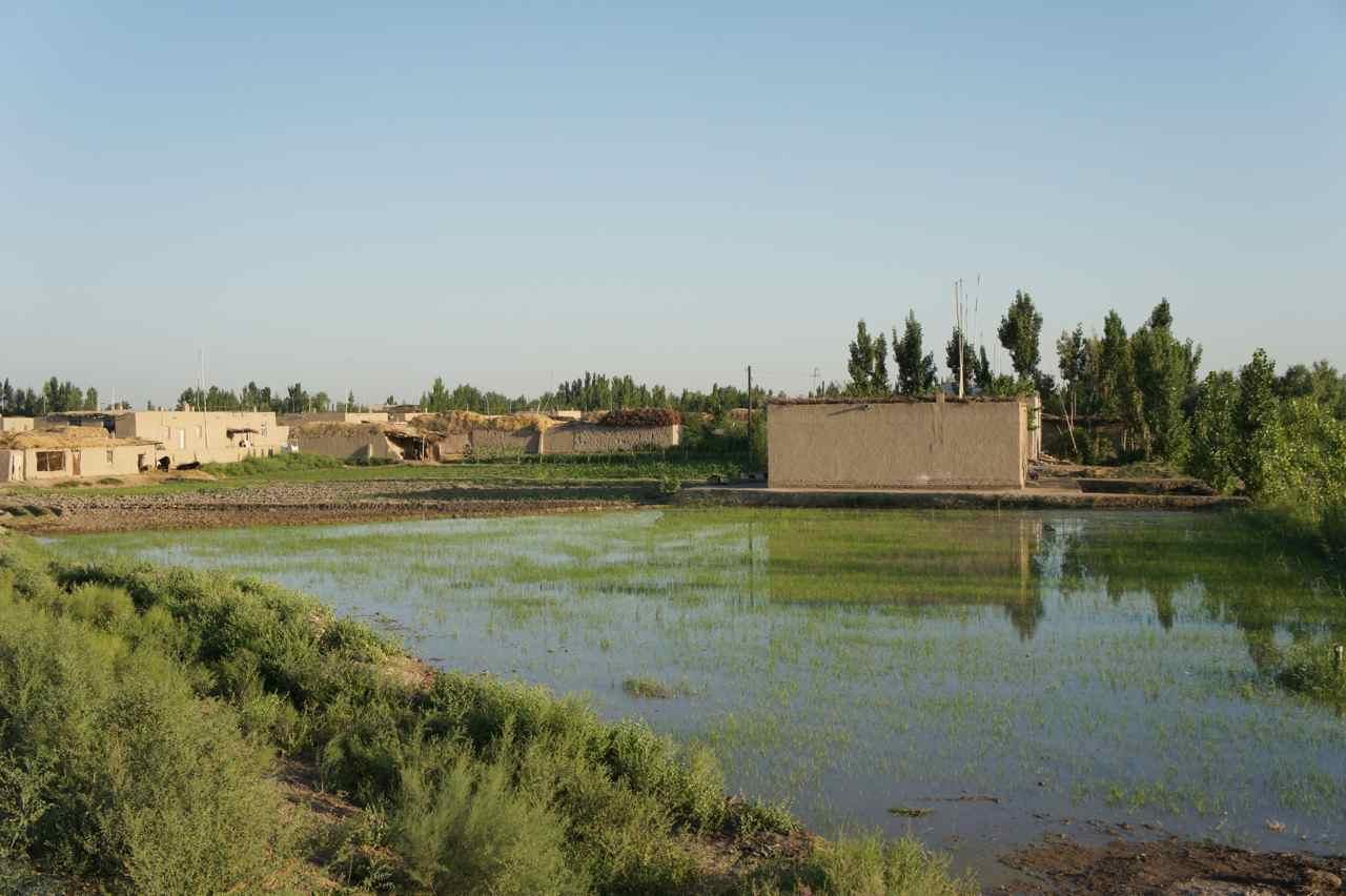 เริ่มปั่นเข้าในจุดที่มีหมู่บ้านแน่นขึ้น ตรงนี้มีนาข้าวด้วย และบางพื้นที่ปลูกต้นสำลี
