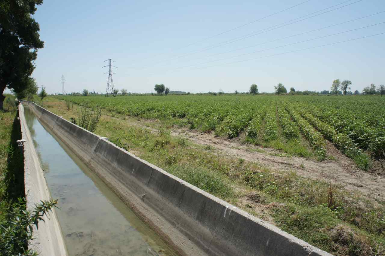 Cotton fields and irrigation canals