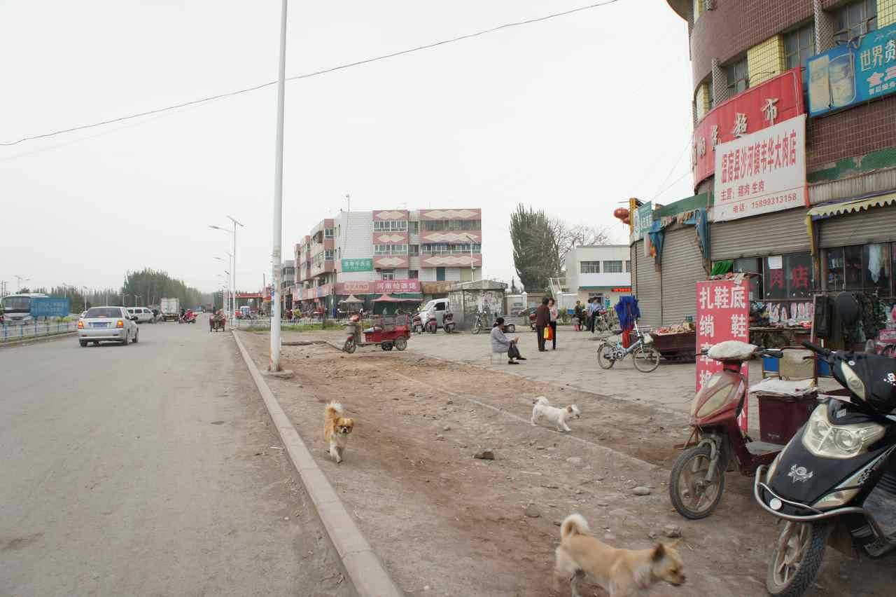 หมาพันธุ์ปักกิ่งวิ่งกันเกลื่อนตามท้องถนนเลย เหมือนหมาข้างถนนบ้านเรา แปลกดี เพราะที่สวีเดนพันธุ์นี้จะแพงมาก เพื่อนที่ทำงานเคยเลี้ยงอยู่ตั้ง 4-5 ตัว