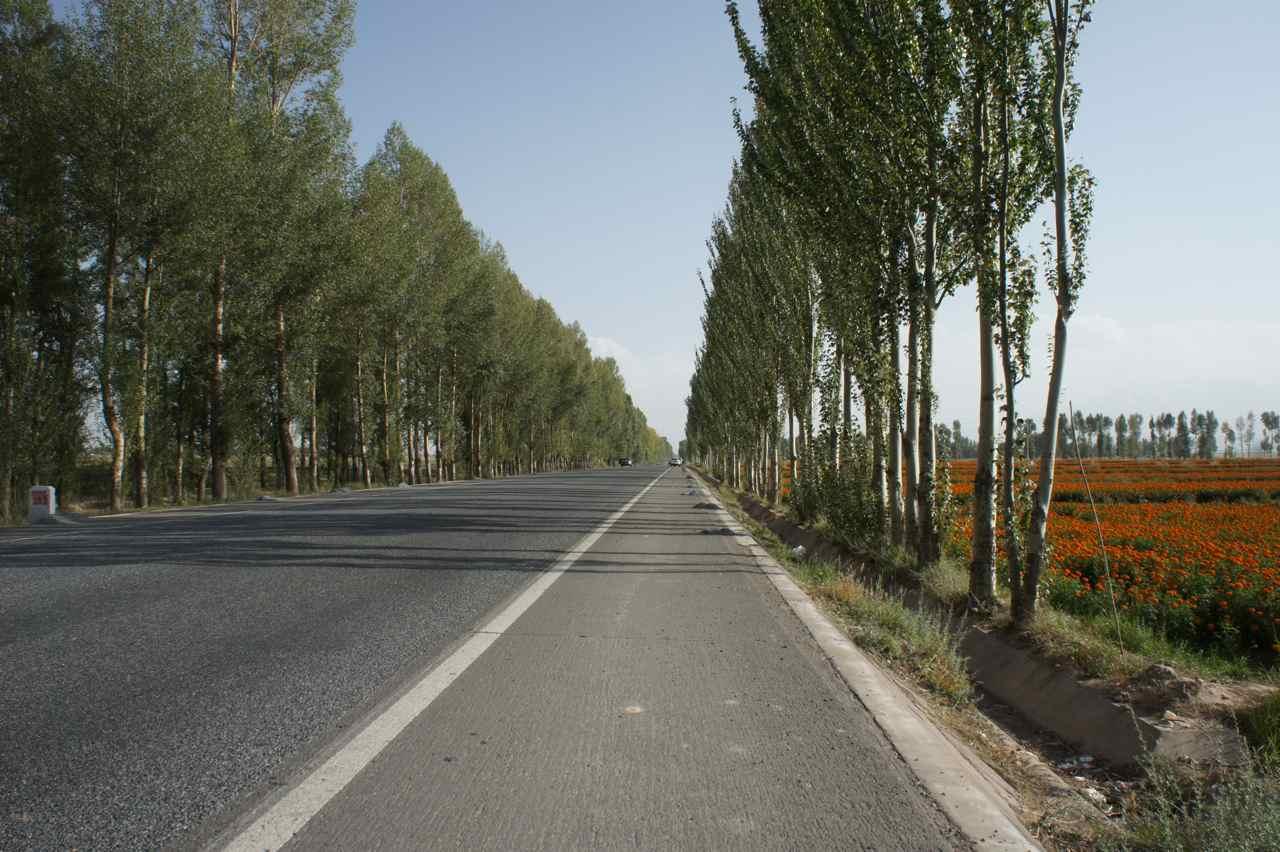 ถนนหนทางของจีนมักจะมีต้นไม้ข้างทาง ทำให้รู้สึกร่มรื่นเขียวเย็นตา