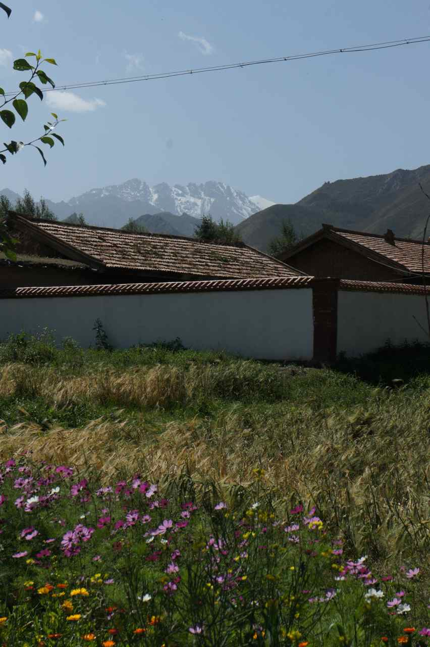 Flowers in front of a house with majestic mountains in the background