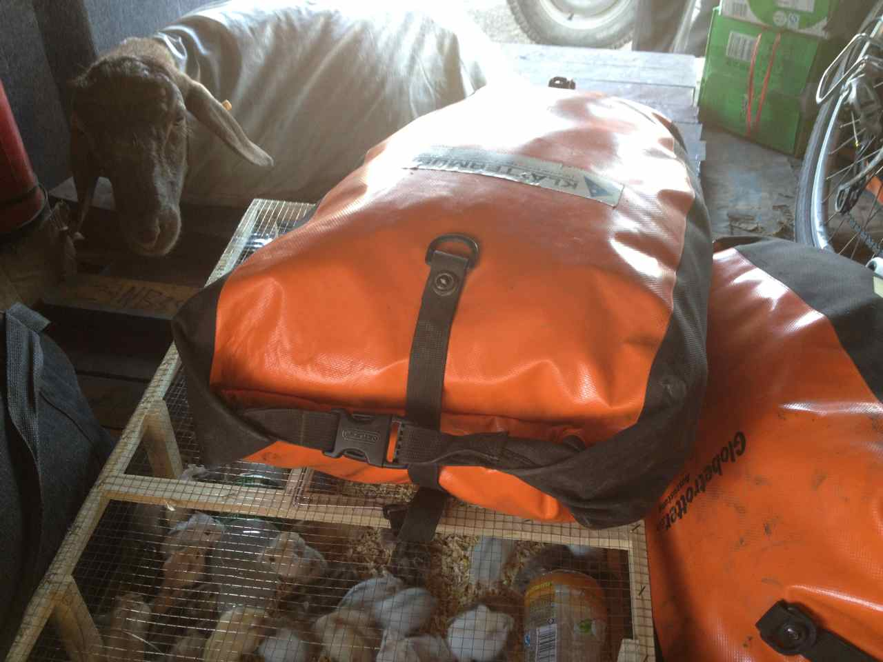 The sheep in a sack watches our panniers put on top of a box with live mice