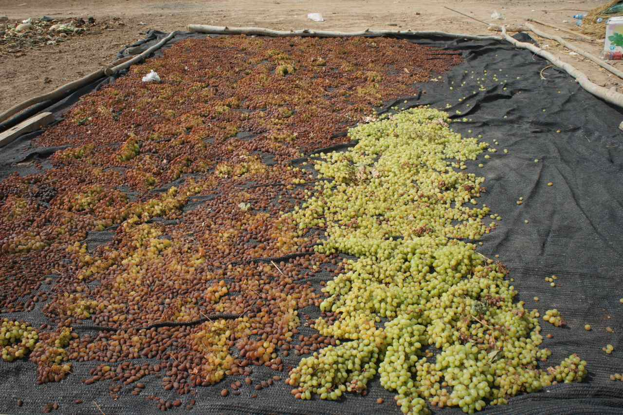 Grapes in different conditions, raisins to the left and fresh to the right
