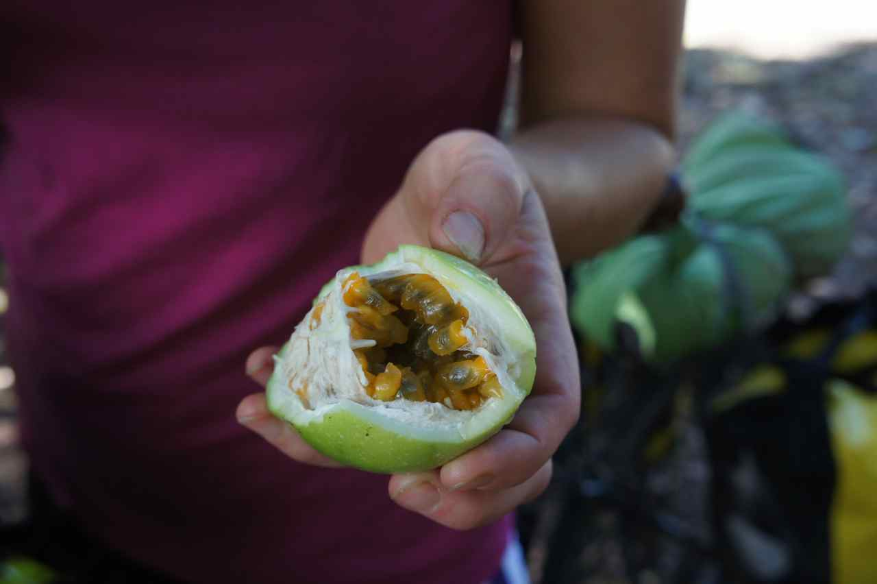 We found ripe passionfruit on the ground