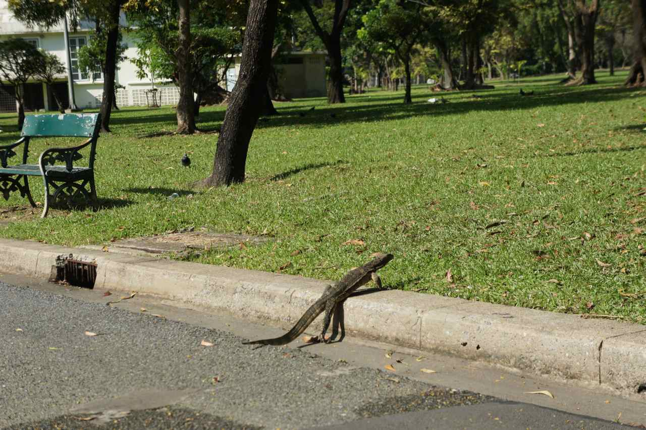 Mr. Lizard - if you were a cat, we would say that you only have 8 lives left now ;-)